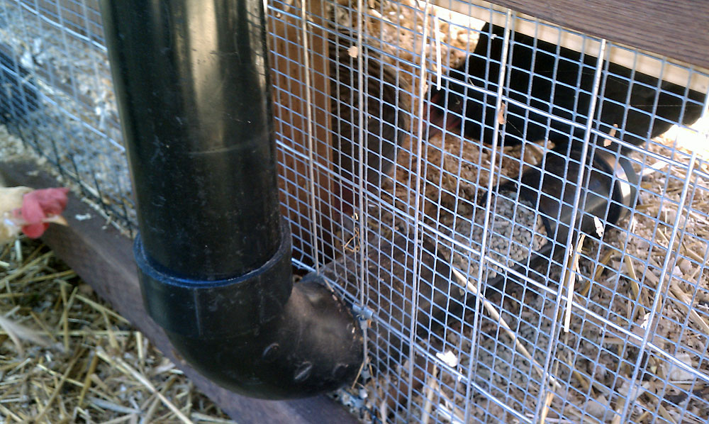 Automatic Chicken Feeder - Installed