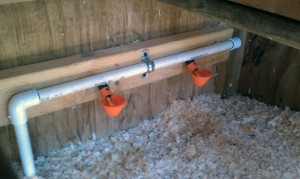 Chicken Coop Automatic Watering System - Poultry Cups