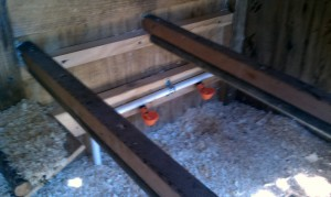 Chicken coop Interior - lower roosts