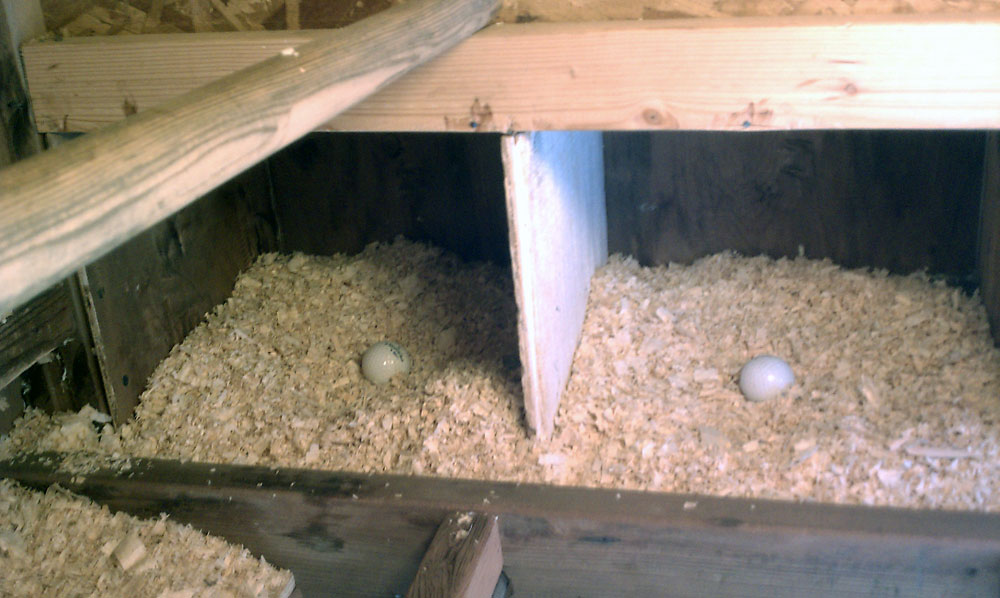 Chicken Coop Interior Chicken Coop Nesting Boxes Interior