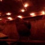 Chicken Coop Interior Lights (star lights)