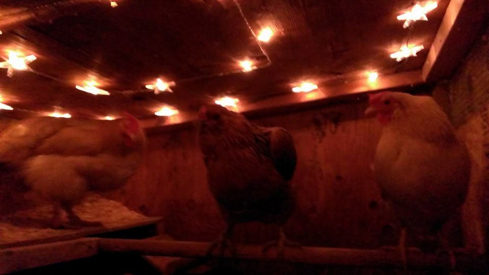 Chicken Coop Interior Lights (star lights)